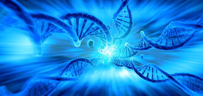 Mesothelioma Clinical Trial of Nintedanib Begins