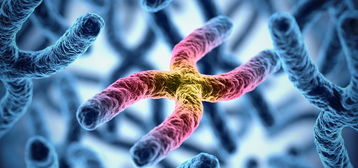 BAP1 Gene Mutation Could Predict Mesothelioma Survival Prospects